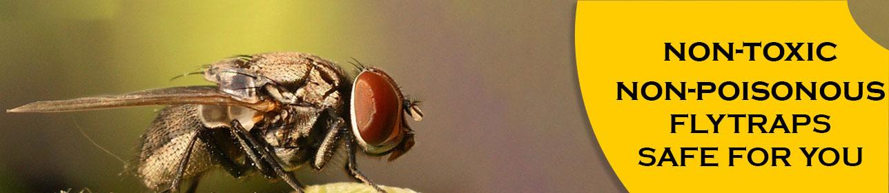 FlyTrap-Non-Posionous-Non-Toxic-Organic