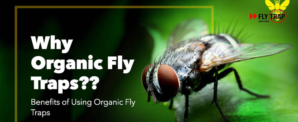 Why Organic Fly Traps FlyTrap.in